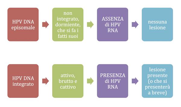 HPV DNA episomale o integrato