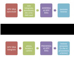 HPV DNA episomale ed integrato